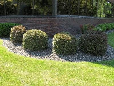 Yard Clean Up Ac Lawn Care